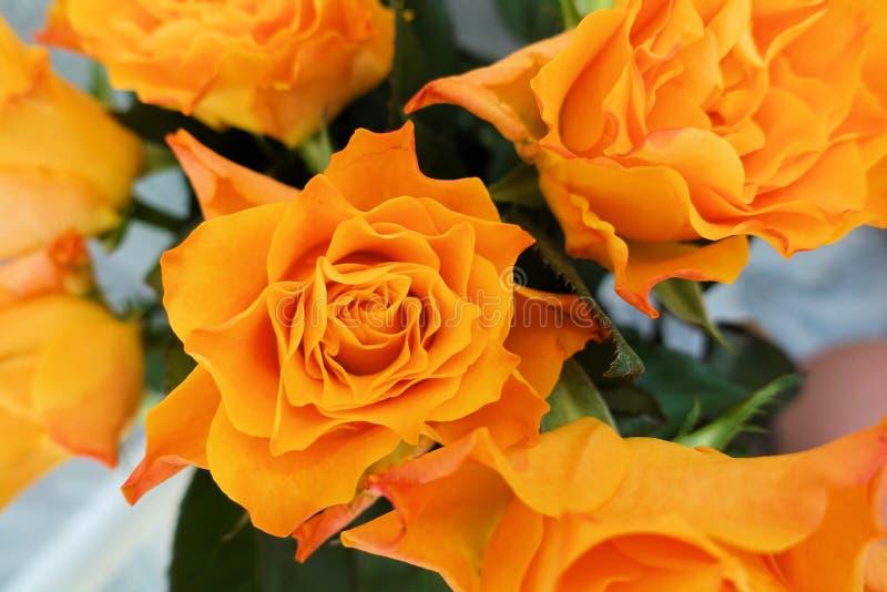Groupe belles de roses rouges et oranges image libre de droits
