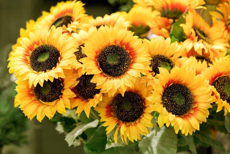 Groupe coloré de tournesols jaunes photos stock