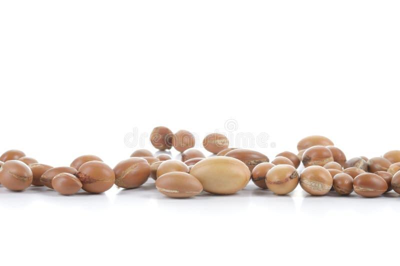 Groupe d'écrous d'argan sur un fond blanc. photographie stock