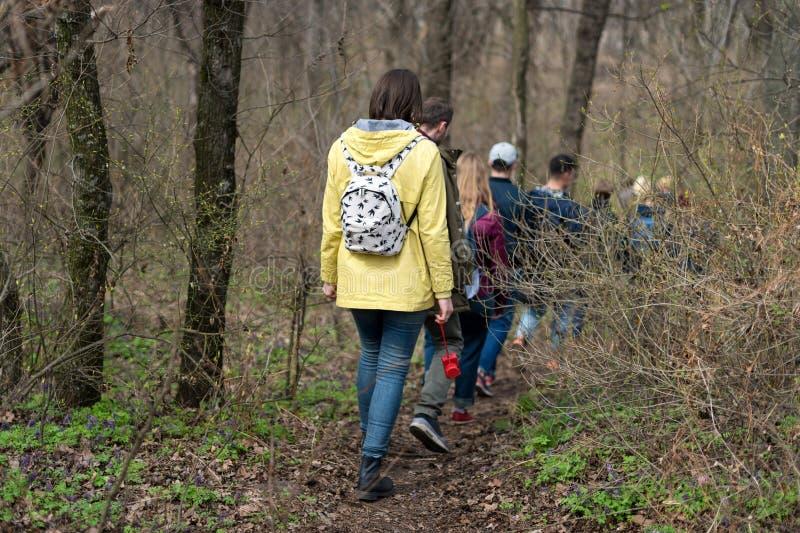 Groupe d'amis marchant avec la forêt de sacs à dos au printemps du dos Randonneurs trimardant dans les bois Aventure, voyage images stock