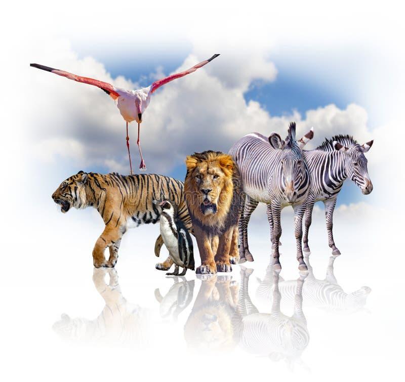 Groupe d'animaux africains sur le fond blanc Leur ombre est réfléchie au sol Derrière eux est le ciel bleu C'est a images stock