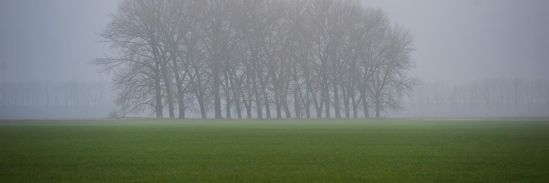 Groupe d'arbres au centre d'un champ agricole de blé d'hiver, matin brumeux Drapeau de Web photos stock