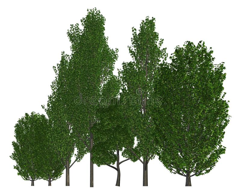 Groupe d'arbres d'isolement sur l'illustration 3d blanche illustration libre de droits