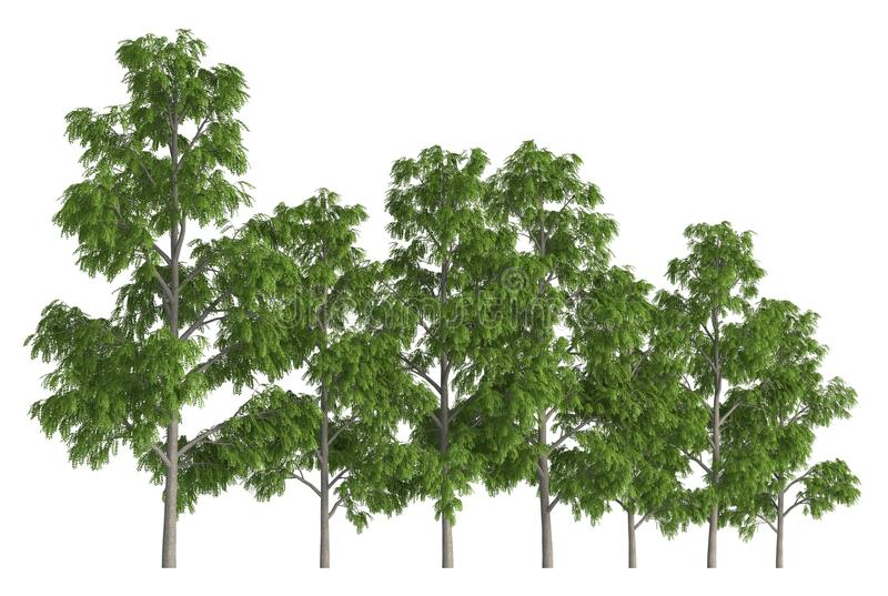 Groupe d'arbres d'isolement sur l'illustration 3d blanche illustration de vecteur