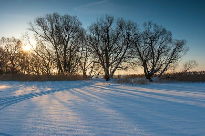 Groupe d'arbres nus dans un domaine au jour d'hiver de coucher du soleil photographie stock