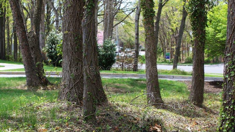 Groupe d'arbres sur un paysage paisible image stock