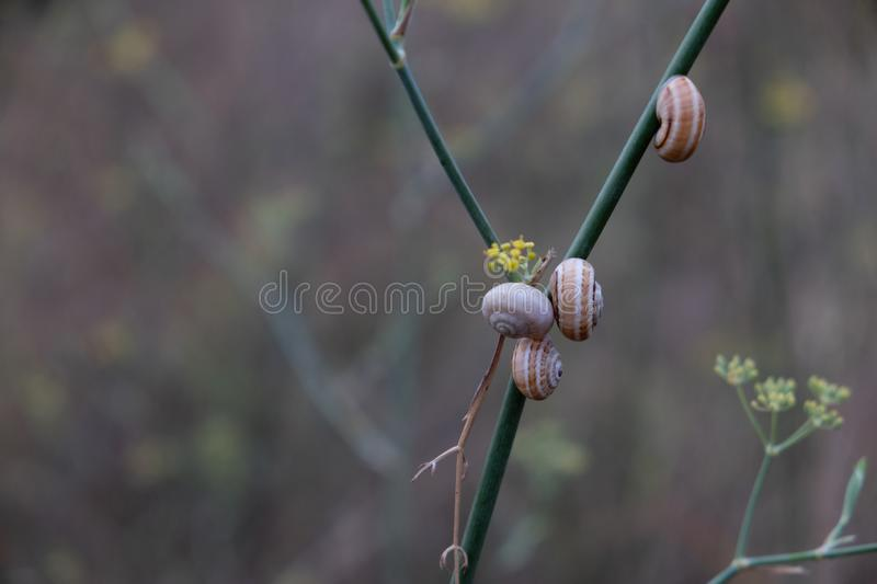 Groupe d'escargots sur la même branche de buisson photo stock