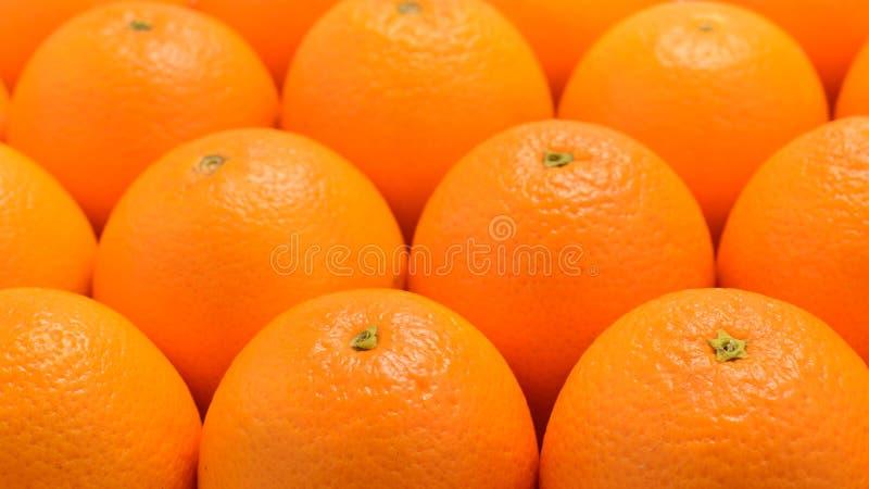 Groupe d'oranges dans une rangée d'isolement sur le fond blanc, l'espace pour le texte ou la conception image stock