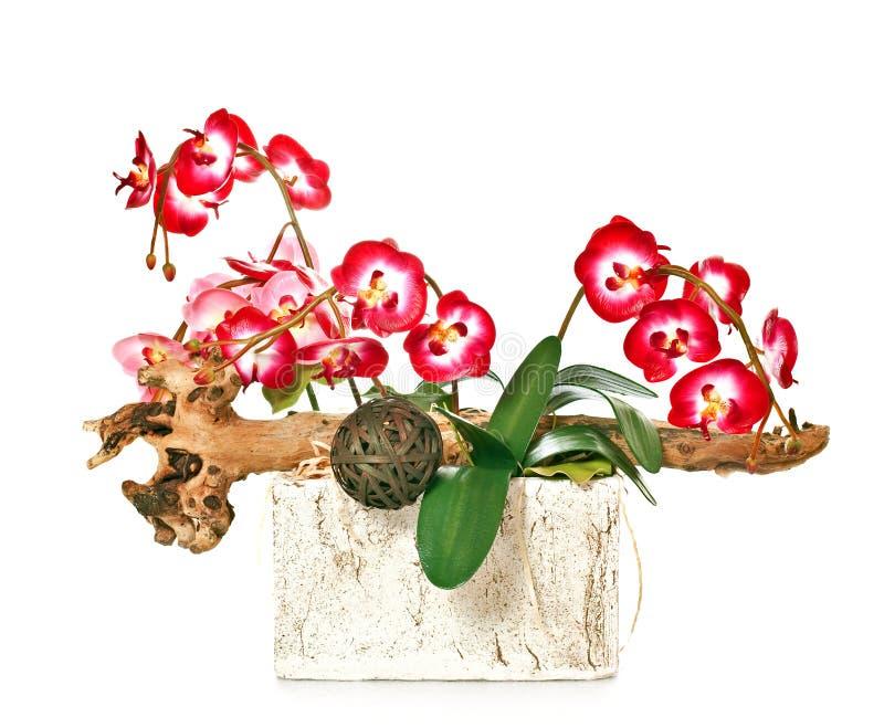 Groupe d'orchidées photos libres de droits