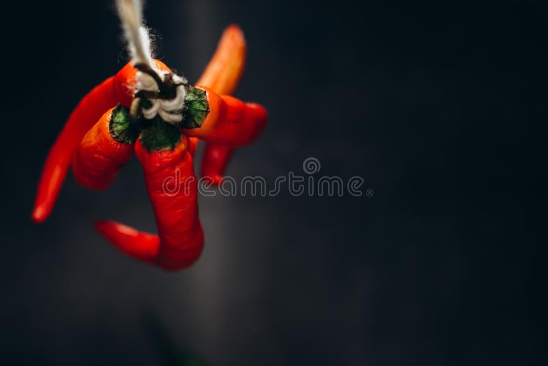 Groupe d'un rouge ardent de poivre de piments de piments, attaché par la ficelle sur un fond foncé image libre de droits