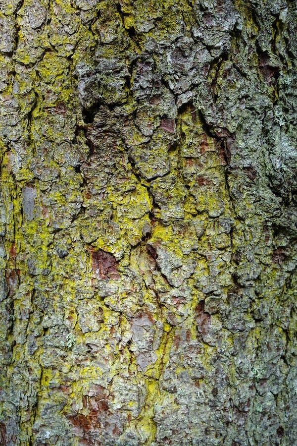 Groupe dans l'arbre photo libre de droits