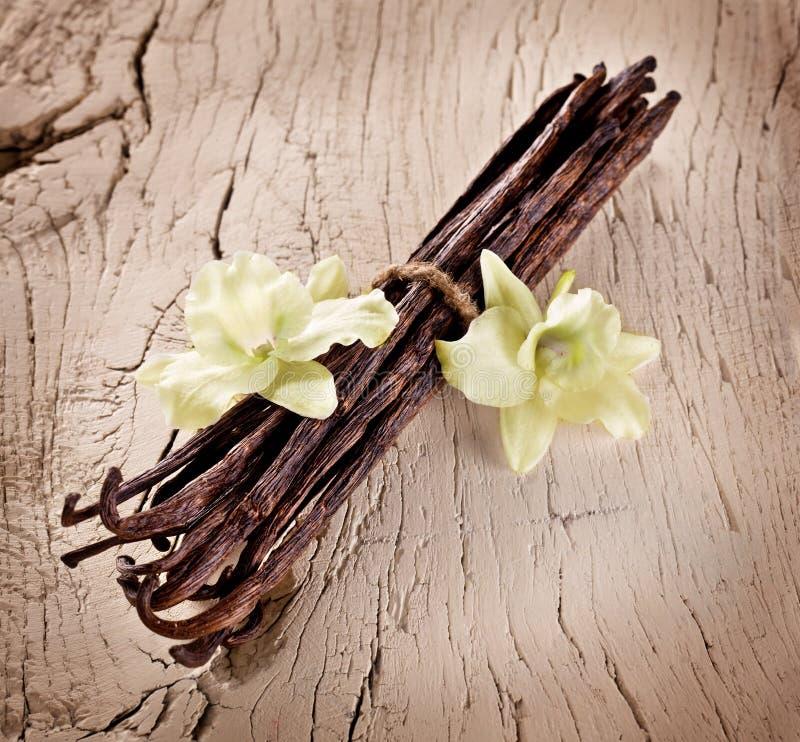 Groupe de bâtons de vanille photo stock