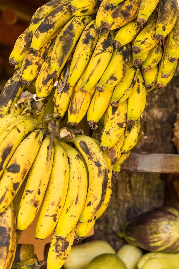 Groupe de bananes sur la tige au marché en plein air près du Trinidad, Cuba photographie stock