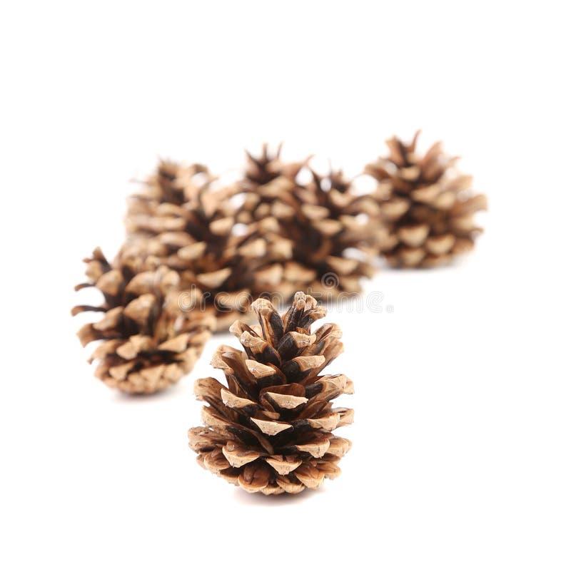 Groupe de cônes de pin. images libres de droits