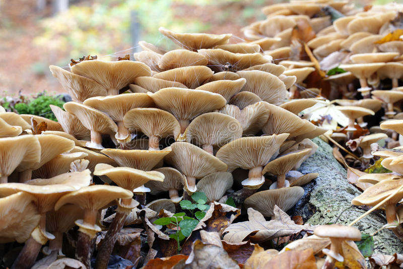 Groupe de champignons - mycologie image libre de droits