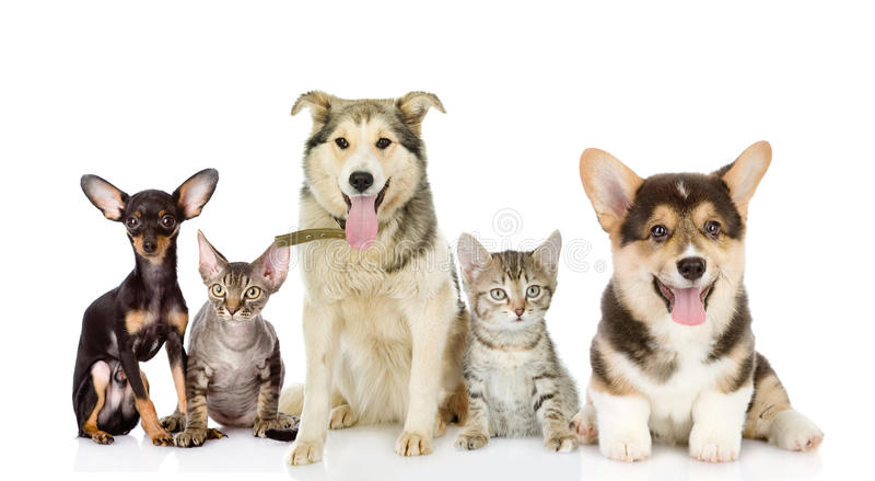 Groupe de chats et de chiens dans l'avant images libres de droits
