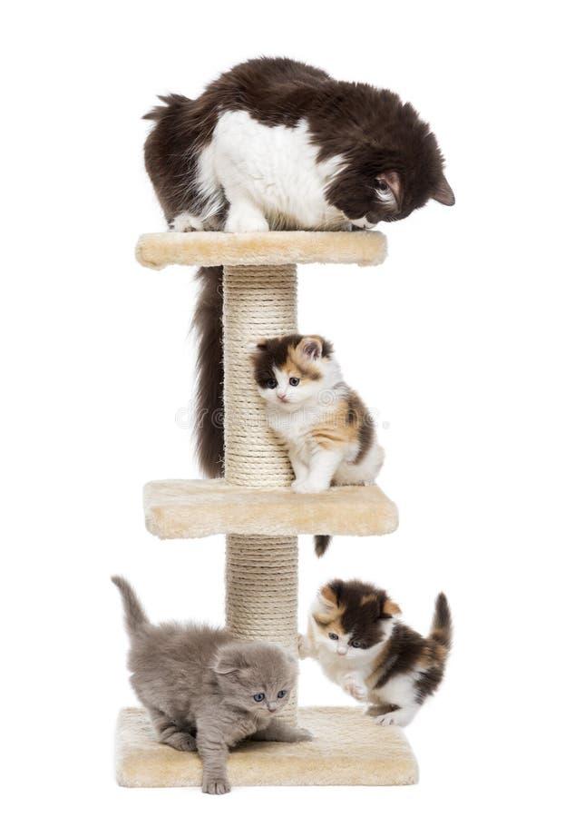 Groupe de chats jouant sur un arbre de chat, d'isolement photographie stock