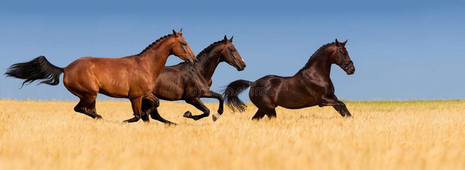 Groupe de cheval images stock