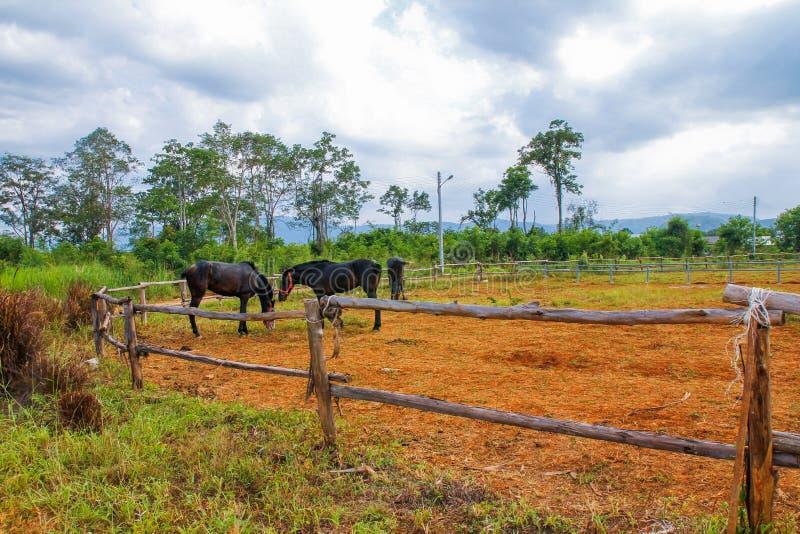 Groupe de chevaux image libre de droits