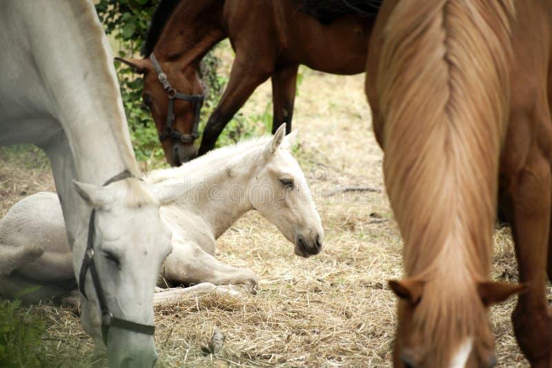 Groupe de chevaux Portugal de ferme photographie stock