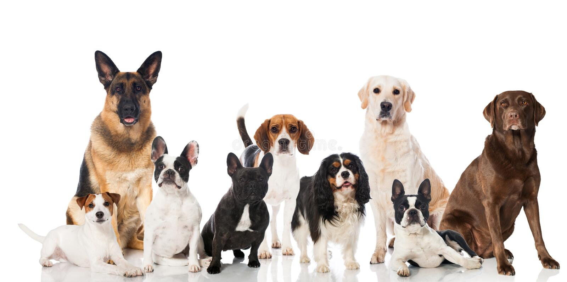 Groupe de chiens photos stock