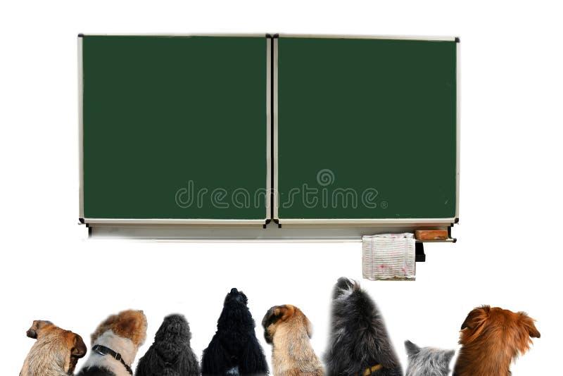 Groupe de chiens dans une salle de classe d'école de chien images stock