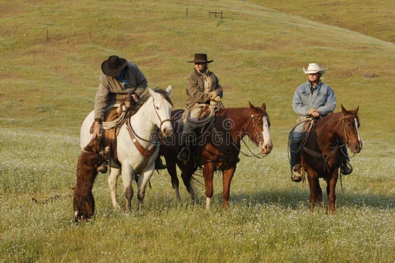 Groupe de cowboys avec le crabot photographie stock libre de droits