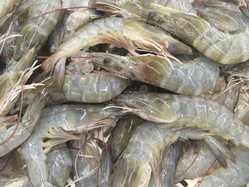 groupe de crevette fraîche photo stock