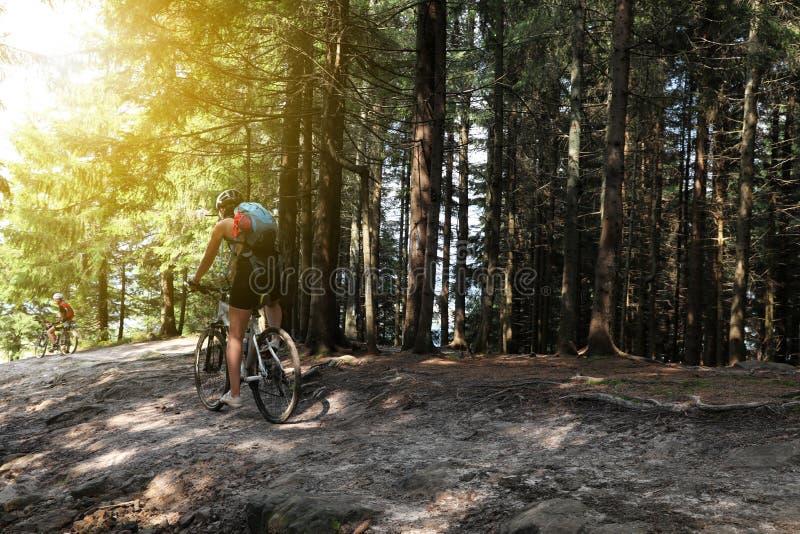 Groupe de cyclistes montant des vélos en bas de forêt photos stock