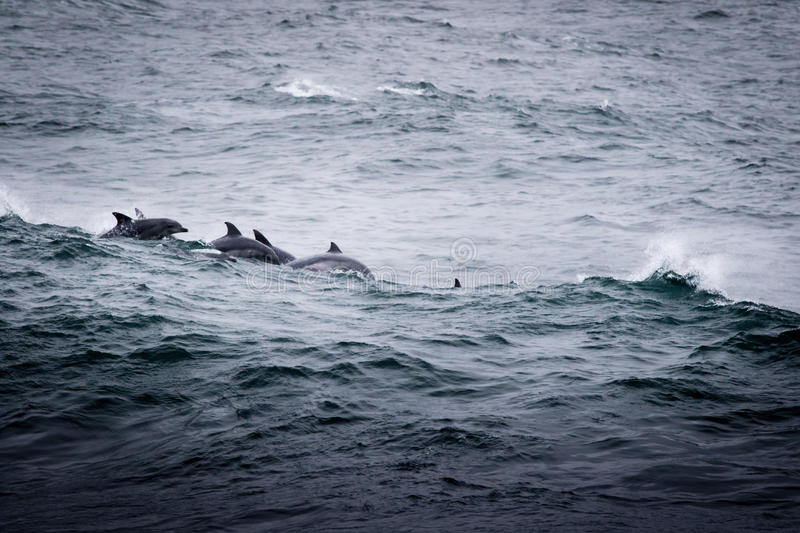 Groupe de dauphins images stock