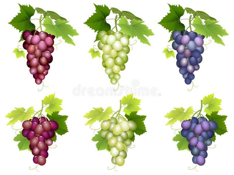 Groupe de différentes variétés de raisins illustration de vecteur