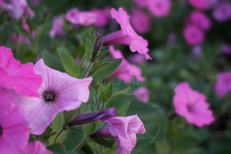 Groupe de fleur images libres de droits