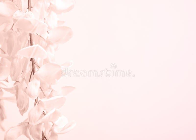 Groupe de fleur blanche images stock