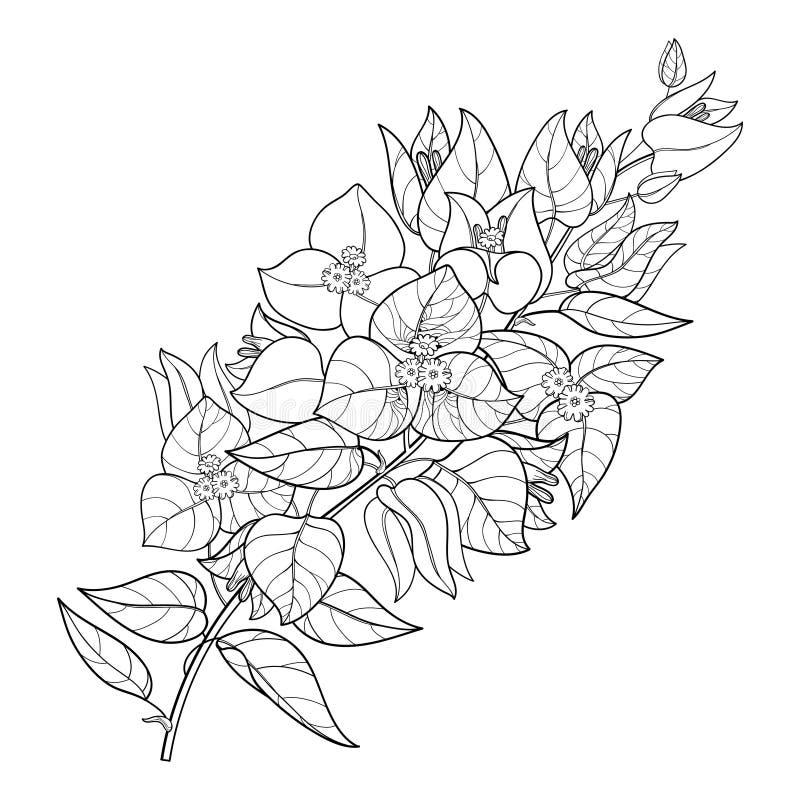 Groupe de fleur de bouganvillée ou de Buganvilla d'ensemble de vecteur avec le bourgeon et la feuille dans le noir d'isolement su illustration libre de droits