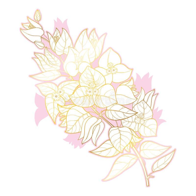 Groupe de fleur de bouganvillée ou de Buganvilla d'ensemble de vecteur avec le bourgeon et la feuille en or et le rose d'isolemen illustration stock