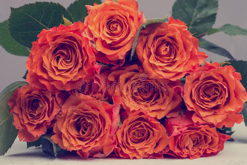 Groupe de fleur orange de roses avec les feuilles vertes photographie stock