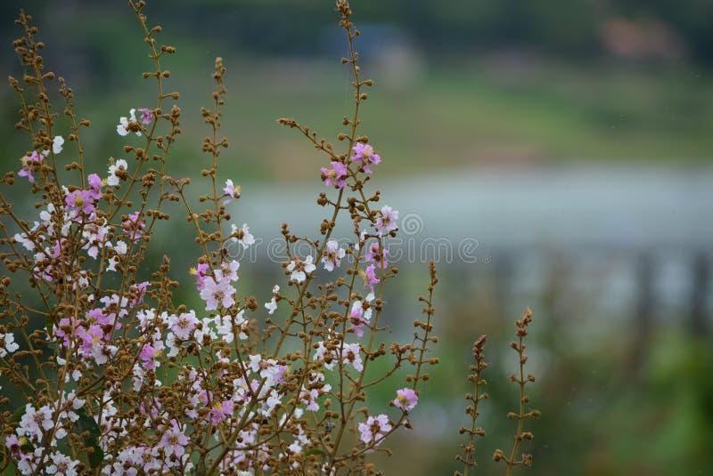 Groupe de fleur rose photo stock