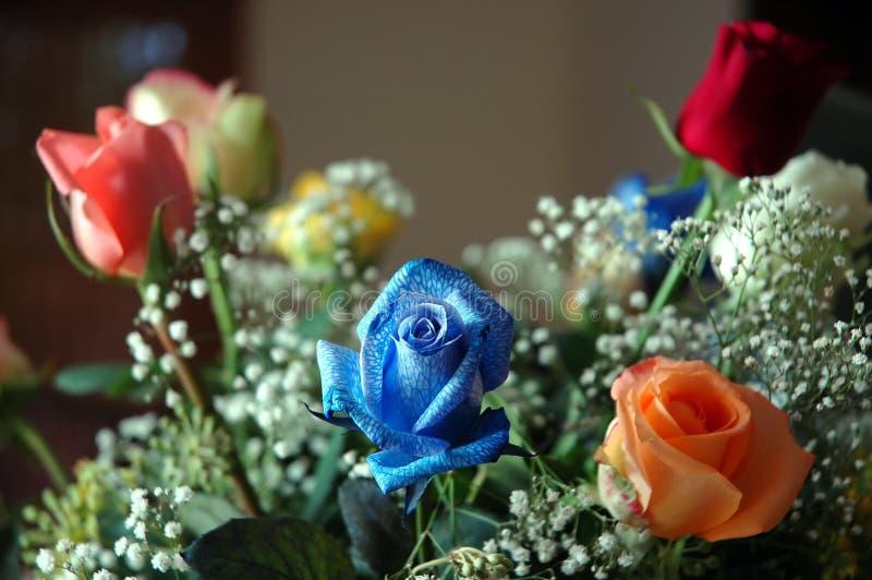 Groupe de fleurs images libres de droits