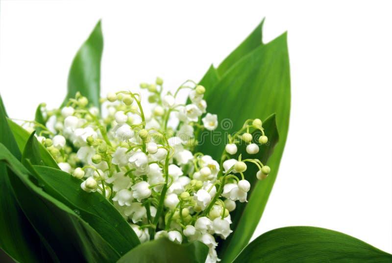 Groupe de fleurs photos libres de droits