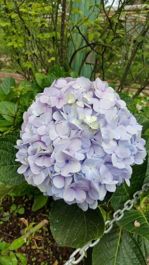 Groupe de fleurs photos stock