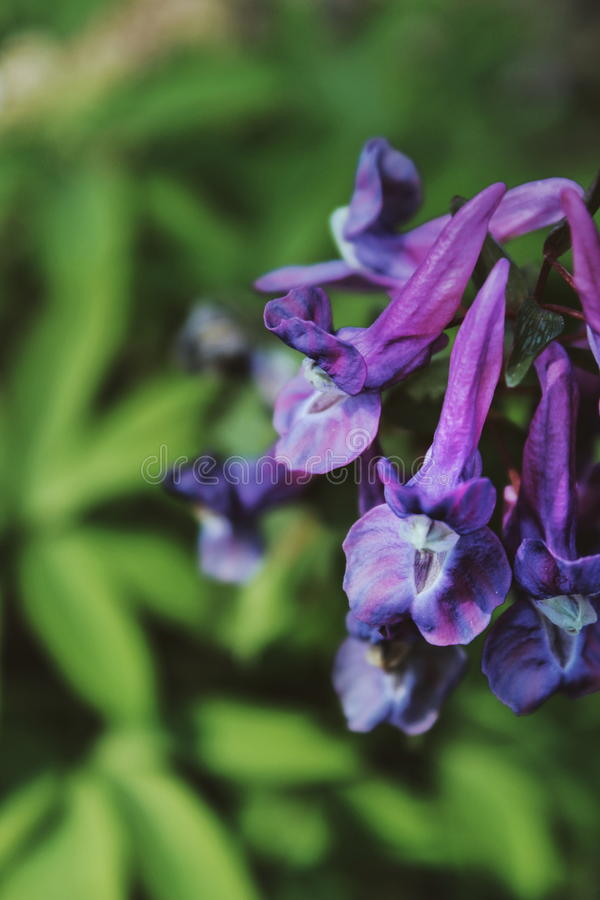 Groupe de fleurs de bord de la route photographie stock