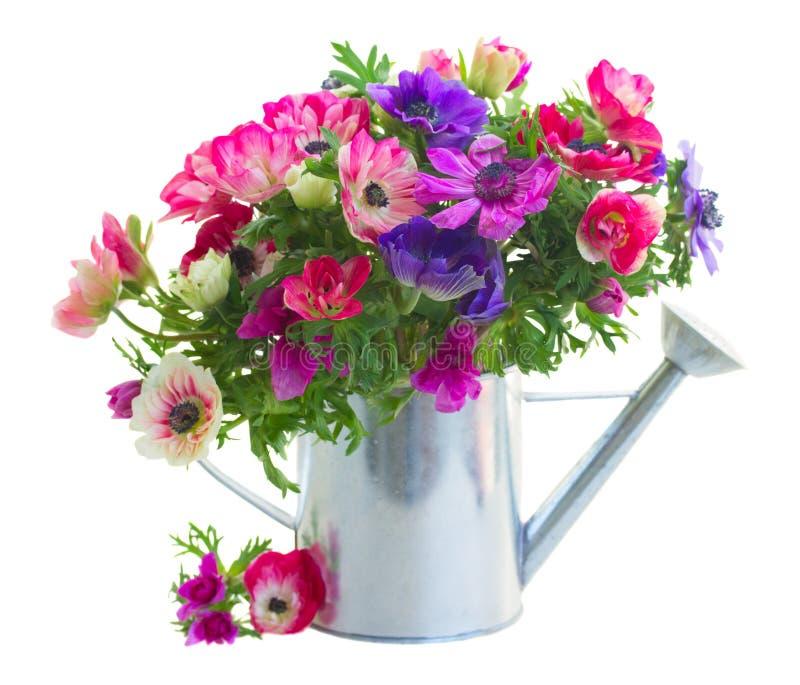 Groupe de fleurs d'anémone photographie stock