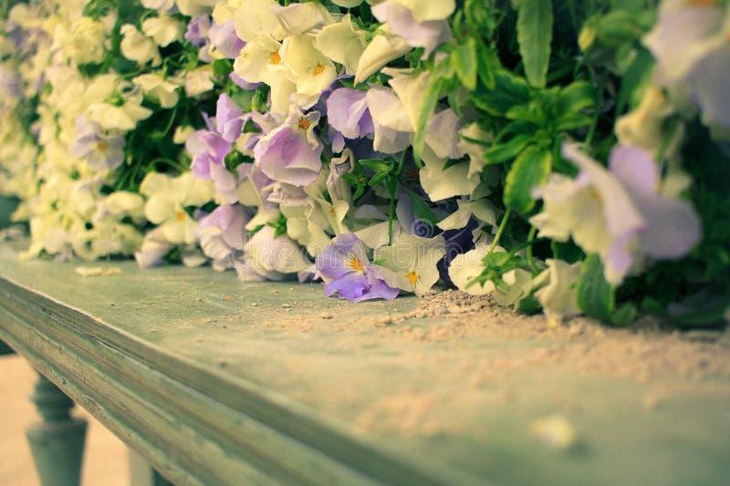 Groupe de fleurs gentil image libre de droits