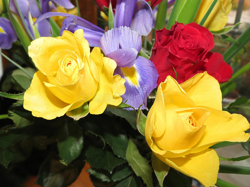 Groupe de floweres frais photos libres de droits