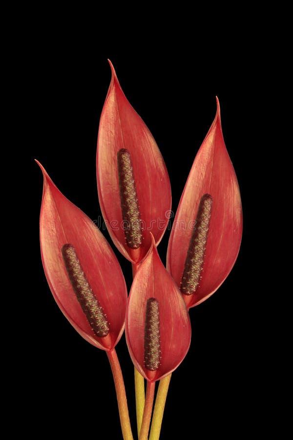 Groupe de fond noir de fleurs photo stock