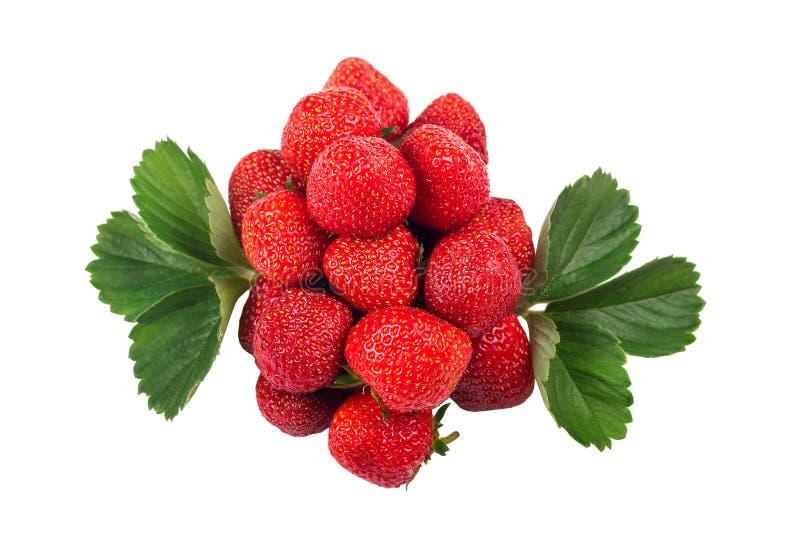 groupe de fraises avec des feuilles d'isolement sur le fond blanc photos libres de droits
