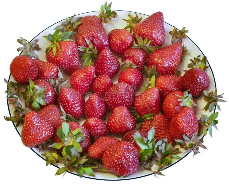 Groupe de fraises dans le plat blanc photos libres de droits