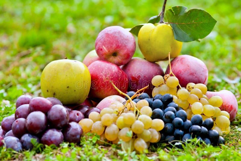 Groupe de fruits extérieurs photos libres de droits