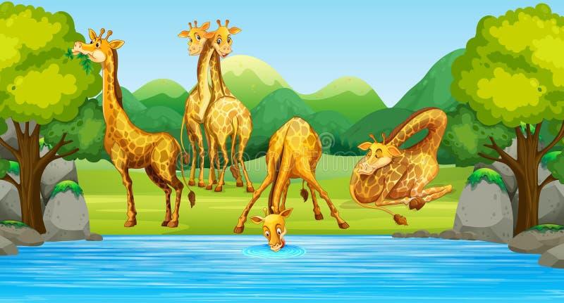 Groupe de girafe en nature illustration de vecteur