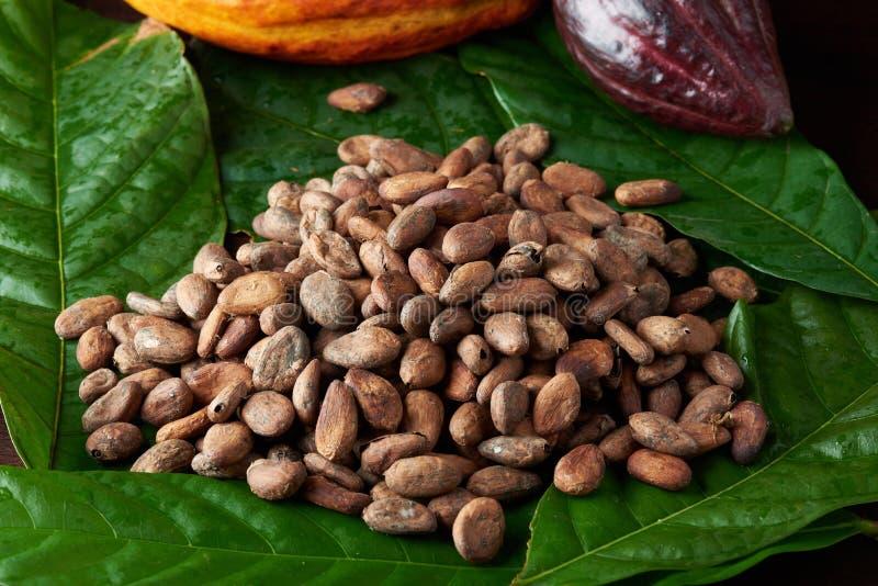 Groupe de haricots de cacao photographie stock libre de droits
